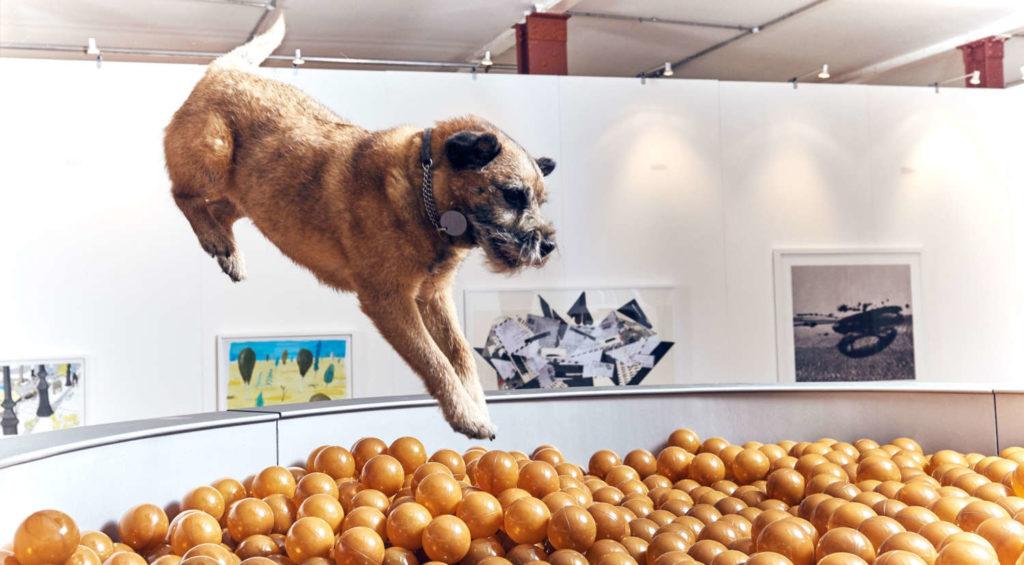 Dog Art - Ball Pit