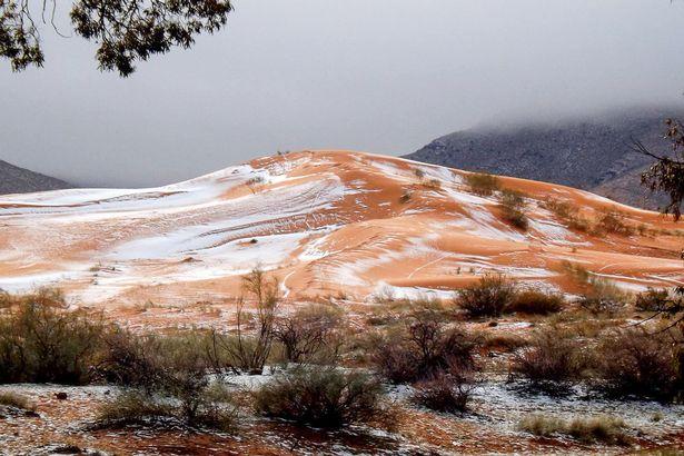 Sahara Snow 3