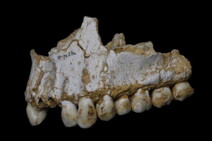 neanderthals teeth dna