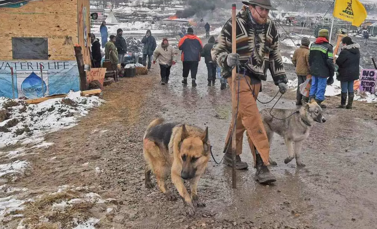 Dakota Access Pipeline Dogs
