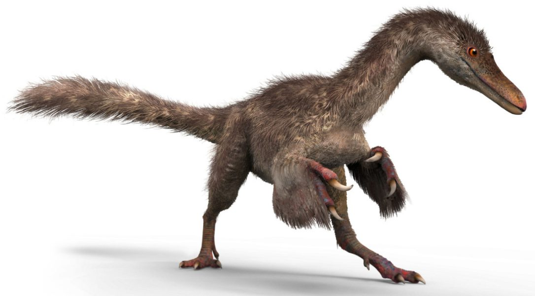 Dino Tail 2